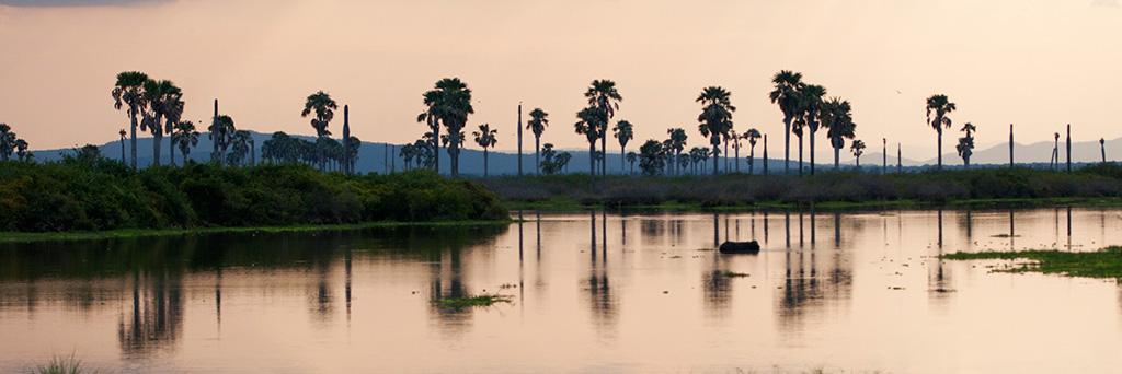 Au fil de la Rufiji River