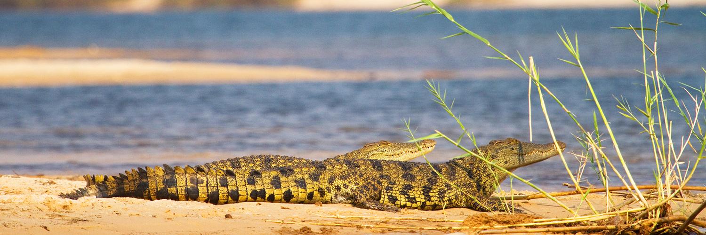 Au fil de l'eau dans le Parc National de Mamili
