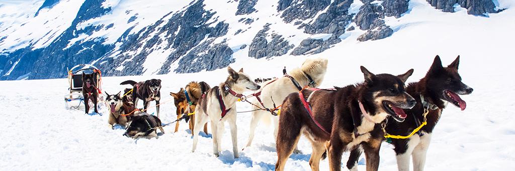 Balade en traineau à chiens en Alaska