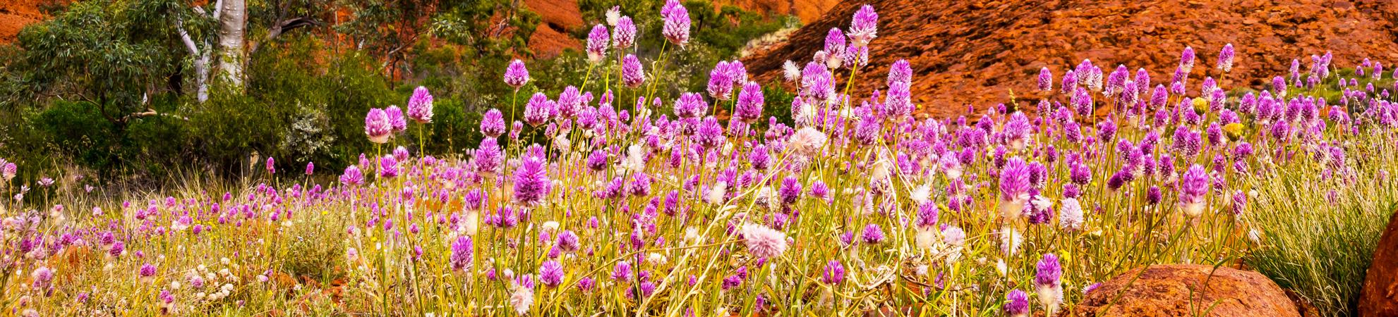 Faune et flore de l'Australie