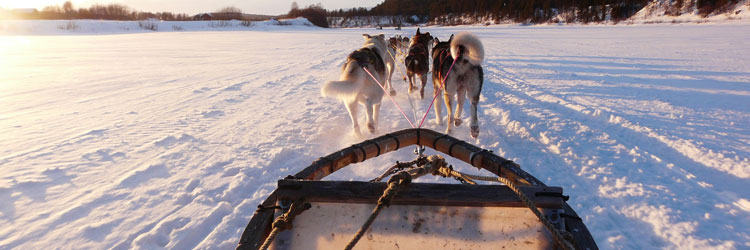 Traîneau à chiens et Hôtel de glace