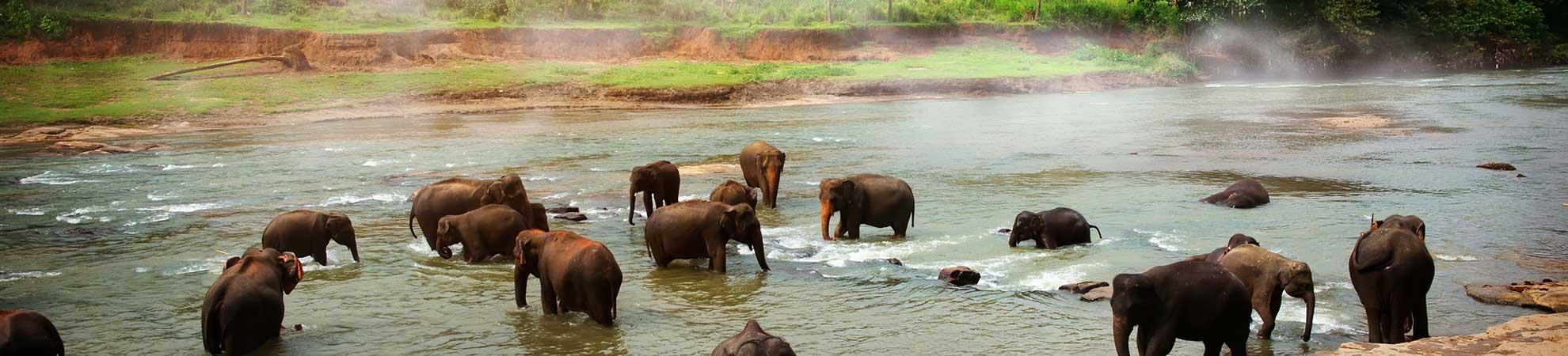 FAune et flore Sri Lanka