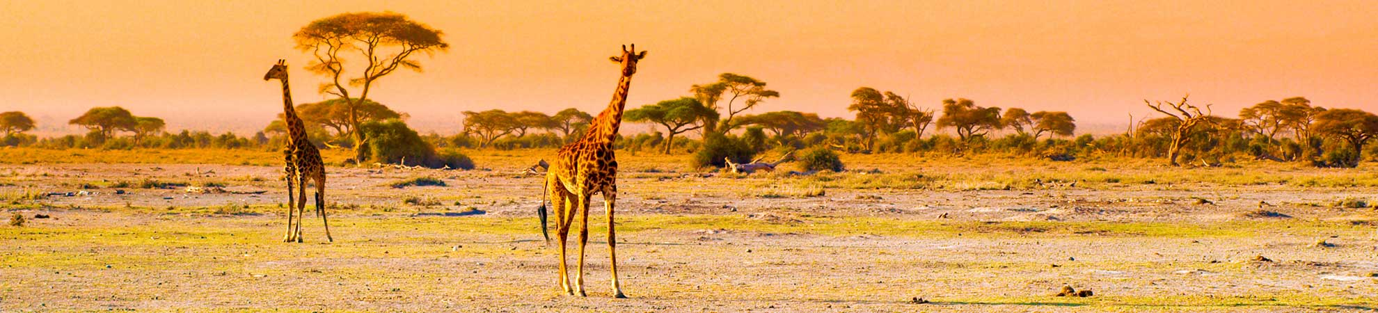 Guide Tanzanie