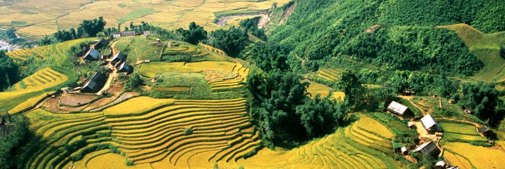 Ferme du Colvert - Fleurs de Lilas - Hoa Tuong Vi
