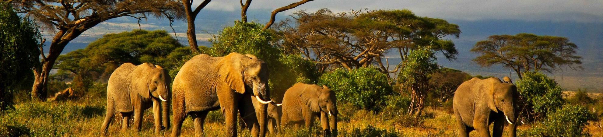 Séjour en Afrique