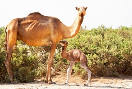 Le Danakil, voyage au bout de l'Abyssinie