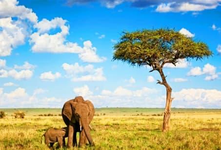 Le Botswana à la belle étoile