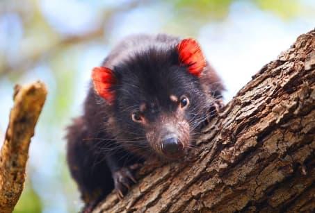 Tasmanie, grandeur nature !