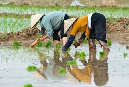 Rizières et île d'émeraude au Vietnam