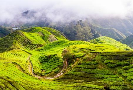 Malaisie estivale : entre forêts primaires et plages idylliques