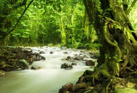 The Lush Nature of Borneo