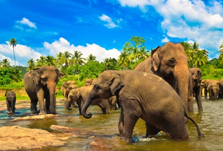 Le Sri Lanka avec mes enfants