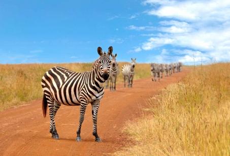 Tanzanie et Rwanda : de la Savane aux Gorilles