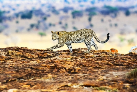Safari et Plage de rêve en Tanzanie
