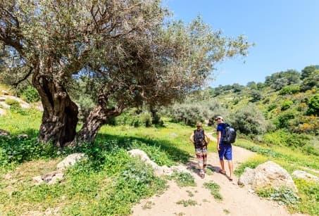 Chemins de Palestine