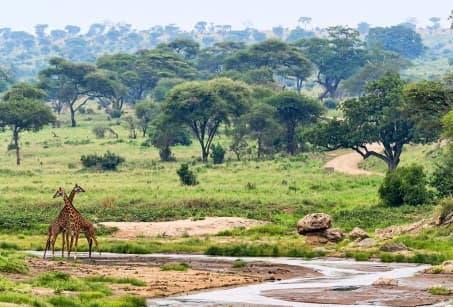 Des pistes africaines à l'île aux épices