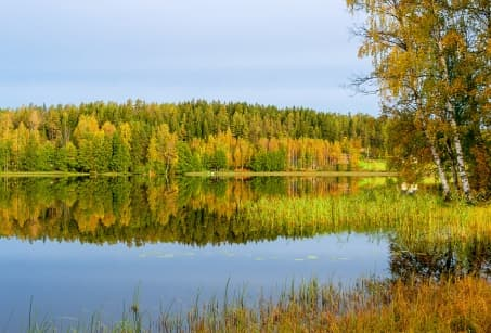 Finlande, l'appel de la forêt