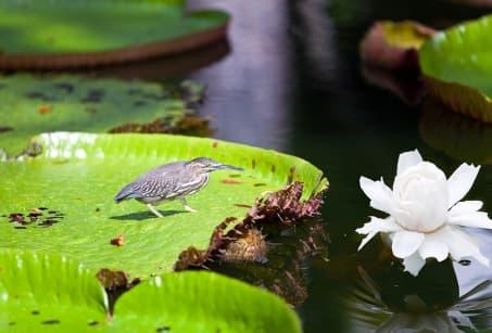 Plaines et méandres du Pantanal