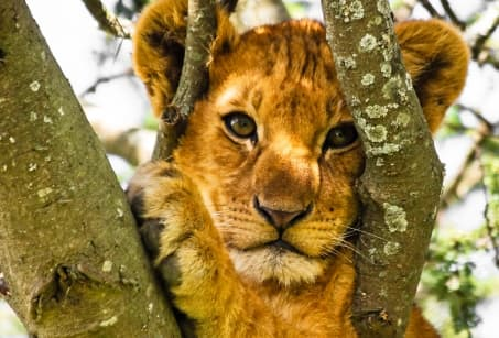 Safaris et lagons, de l'ocre à l'azur