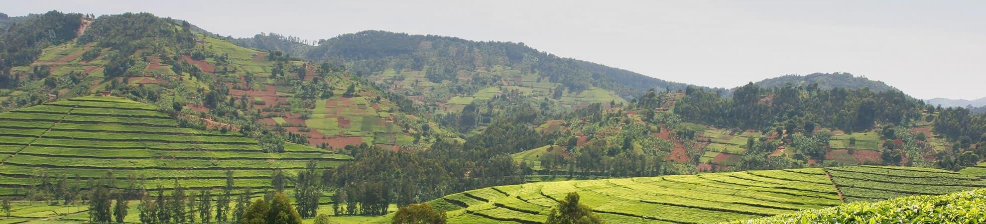 Voyage Le Parc National des Volcans - Rwanda