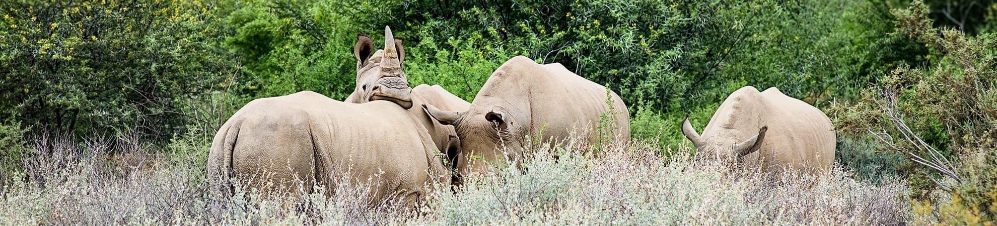 Voyage Mthethomusha Game Reserve