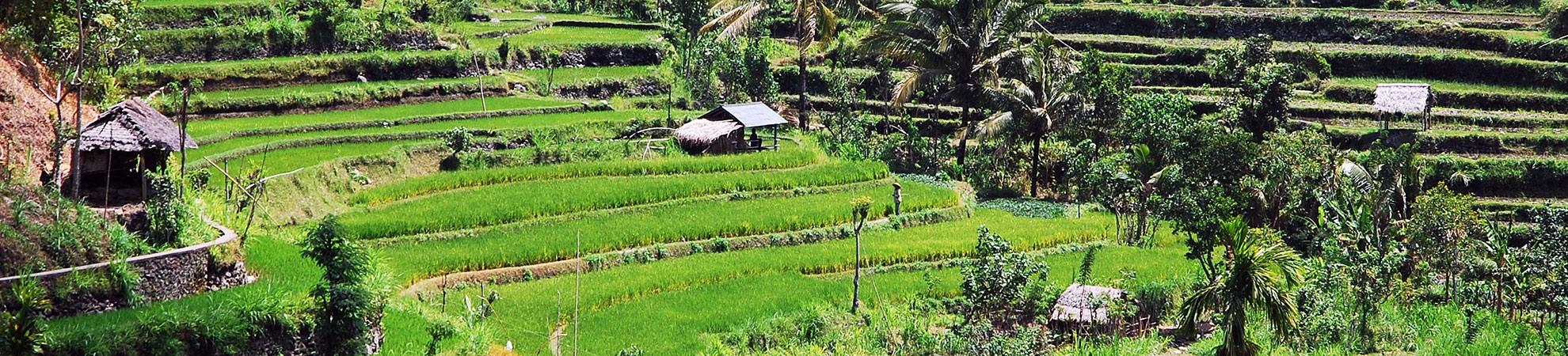Voyage Bangli