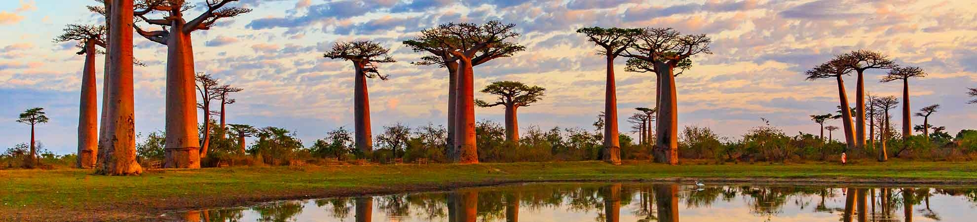 Toutes nos activités à Madagascar