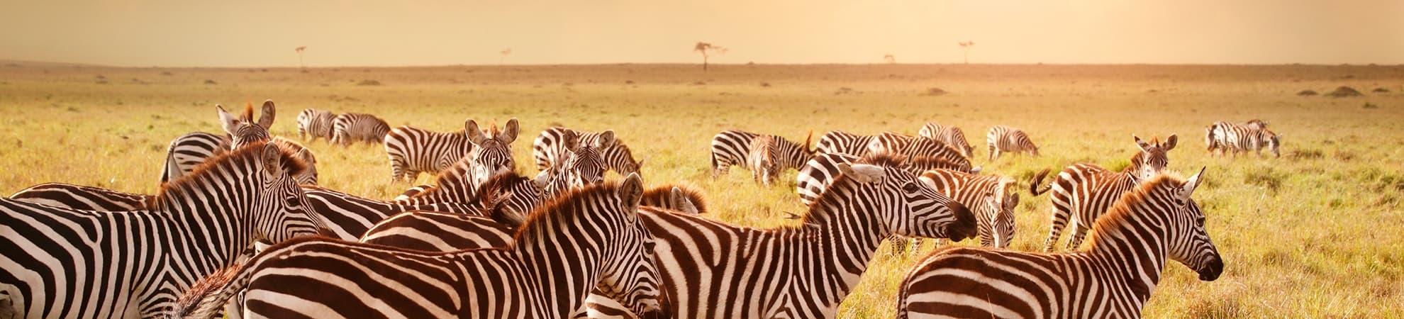 Voyage Afrique