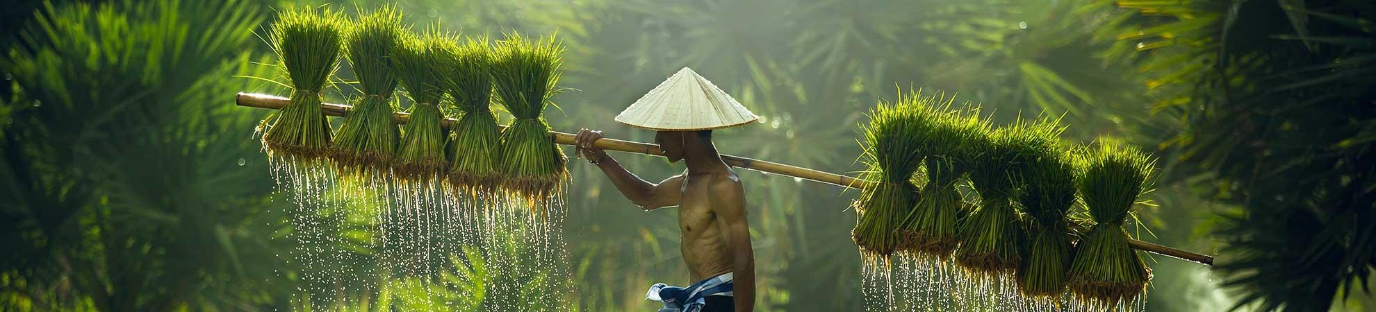 Qui sommes-nous Nos différences au Vietnam