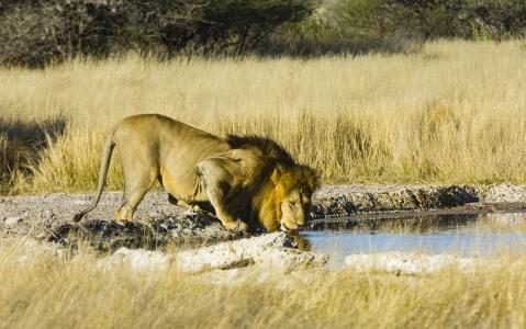 activity Central Kalahari Game Reserve Botswana