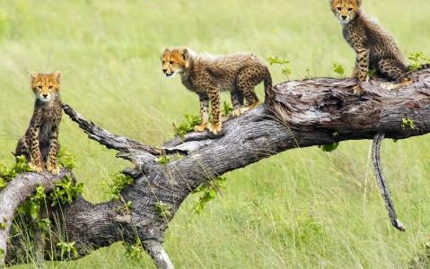 activity Découvrir la Moremi Game Reserve