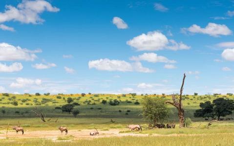 activity Le Désert du Kalahari