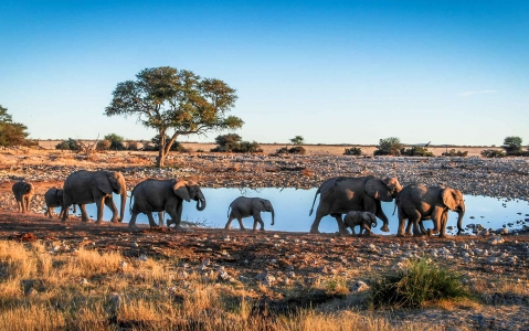 activity Elephant Sanctuary