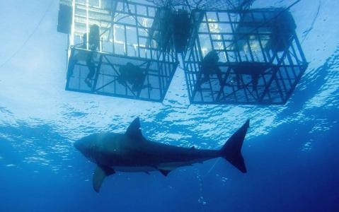 activity Nager à Gansbaai : plongée avec les requins