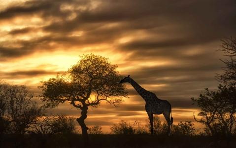 activity Safari en 4x4 au coucher du soleil