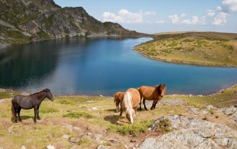 activity Balade à cheval