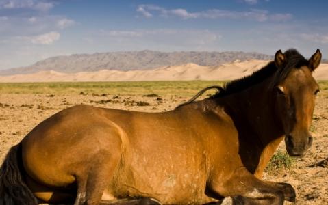 activity Capture de cheval avec Urga