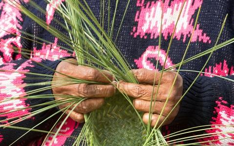activity Immersion en pays Tarahumara