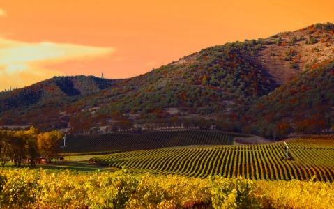 activity Les vignobles de la Napa Valley