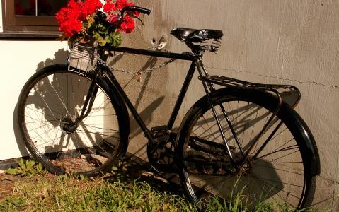activity Location de vélo dans les Lofoten