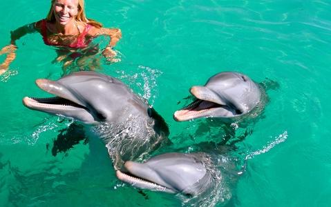 activity Nage avec les dauphins sur la Riviera Maya