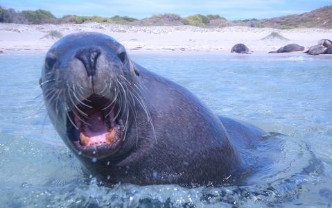 activity Observation des lions de mer à Isla Coronado