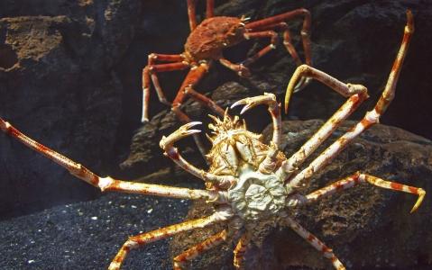 activity Pêche aux crabes géants !