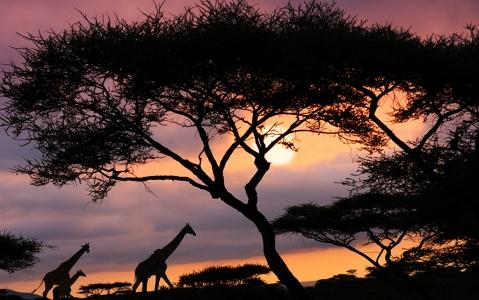 activity Safari de nuit dans le Grumeti