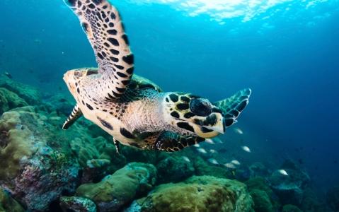 activity Snorkeling et nage avec les tortues