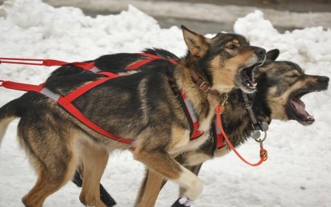 activity Traîneau à chiens en intérieur à Helsinki !
