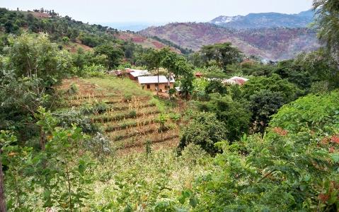activity Trek sur la piste Mwanihani