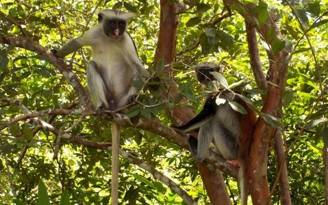 activity Visite de la forêt de Joziani