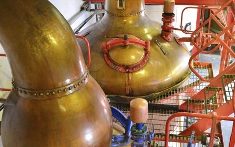 activity Visite d'une distillerie et dégustation de Tequila