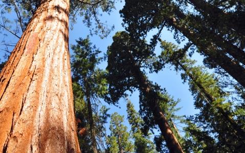 activity Yosemite National Park